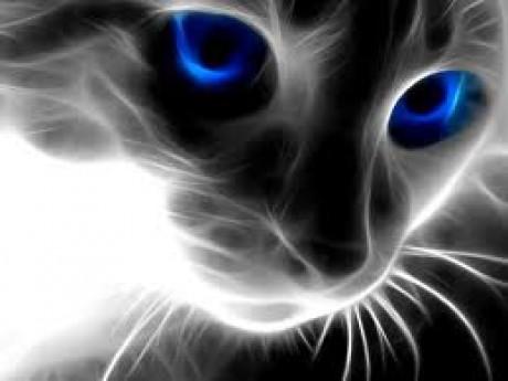Vítám Vás Na Mém Blogu Fotoalbum Moje Tapety Na Plochu Kočka